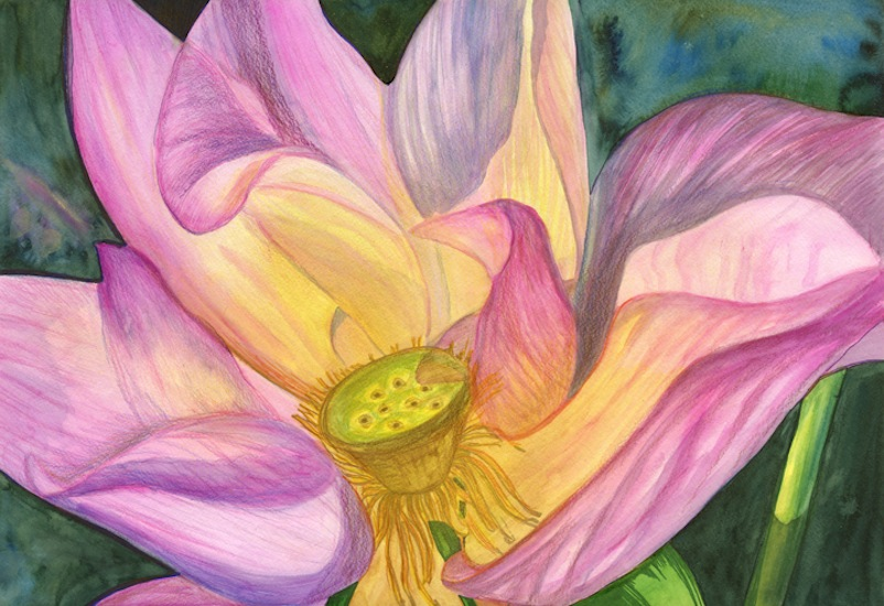 Abstract Watercolor Lotus Lotus Watercolor Pencil on